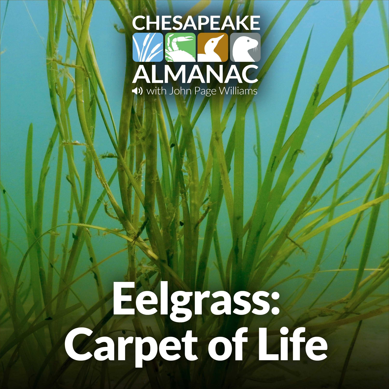 Artwork for podcast Chesapeake Almanac