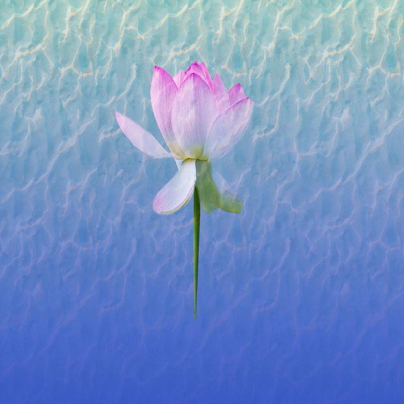 Artwork for podcast Malinka's Mindfulness Show