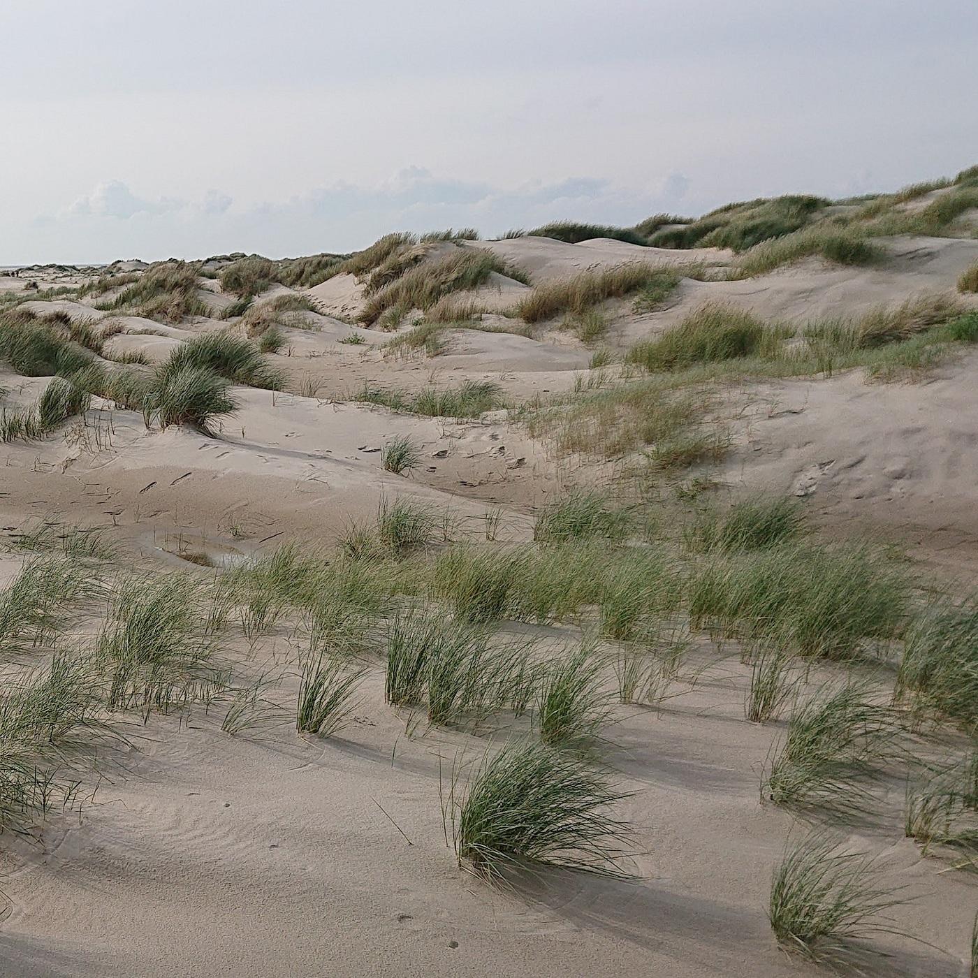 Artwork for podcast Van Delta tot Diepzee