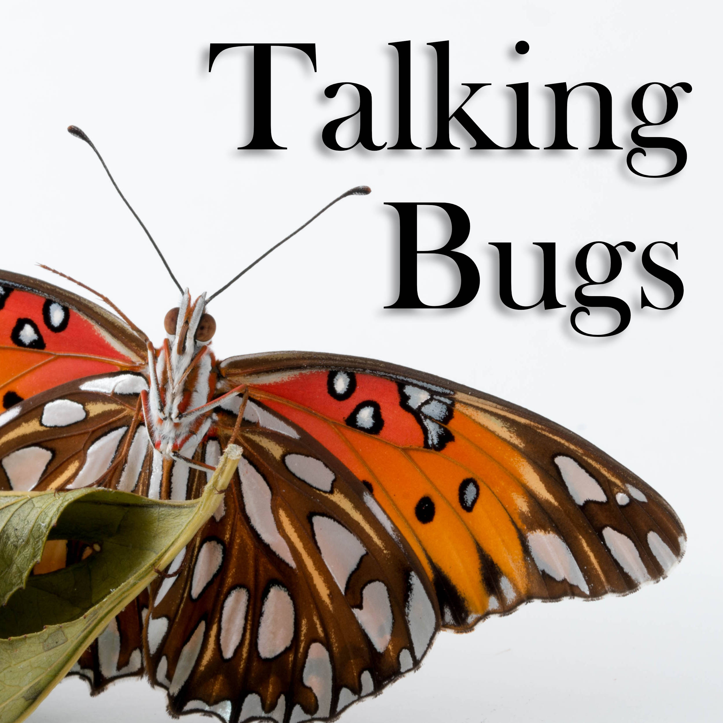 Ep. 3: Dr. Brent Sinclair: Insect Cold Tolerance (Pt. 2)