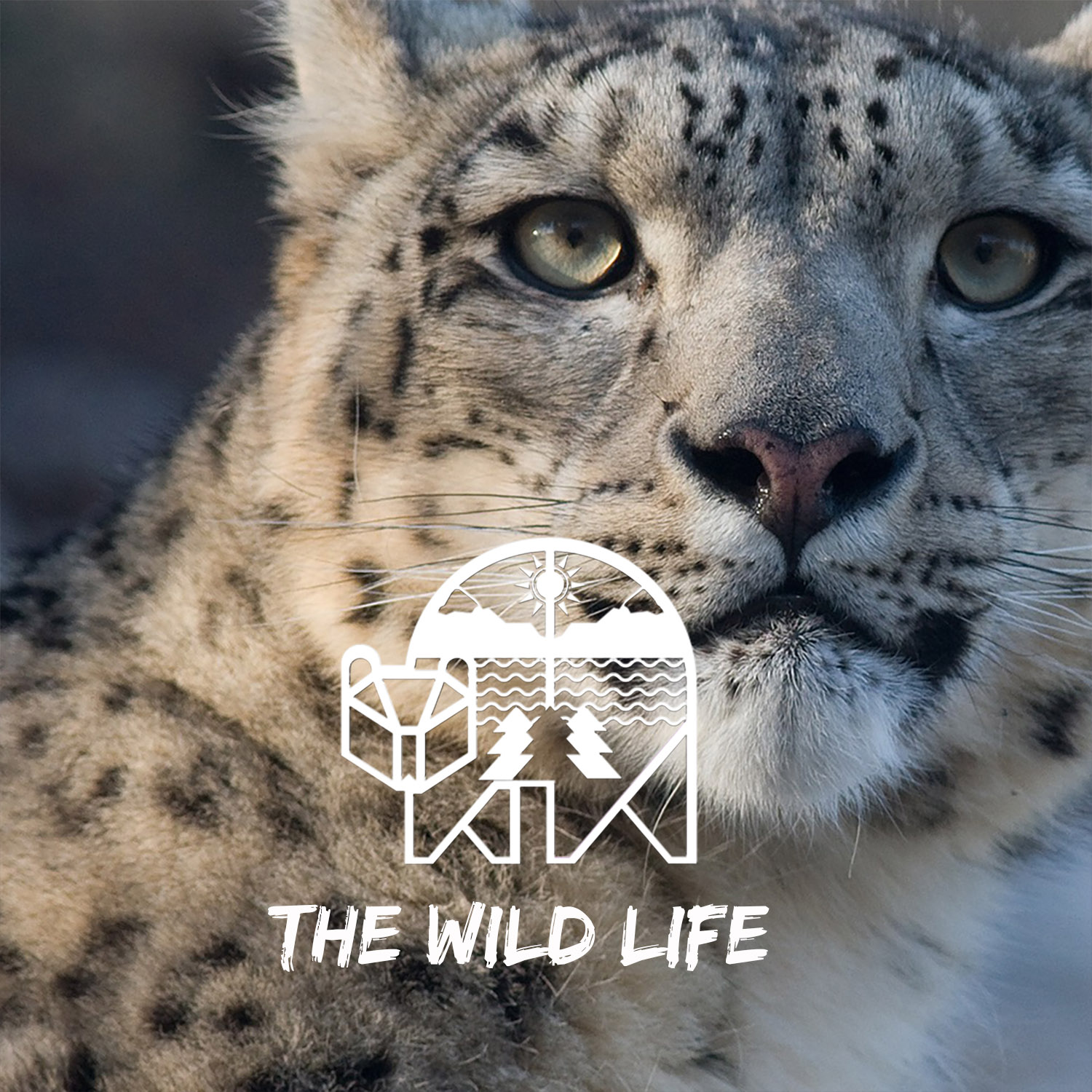 Artwork for podcast The Wild Life